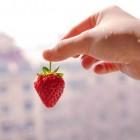 Fruit plukken als vakantiewerk
