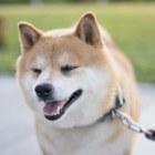 Doge cryptocurrency. Hoeveel is een DogeCoin waard?