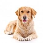 Beroep onder de loep: dierenpension-houder