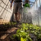Werken als steksteker: agrarisch medewerker in de tuinbouw