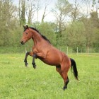 Divoza Horseworld: adressen en openingstijden