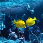 The Fish Philosophy: eindelijk werkpret!