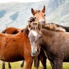 Paard kopen met verborgen gebreken